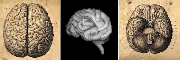 The human brain.
